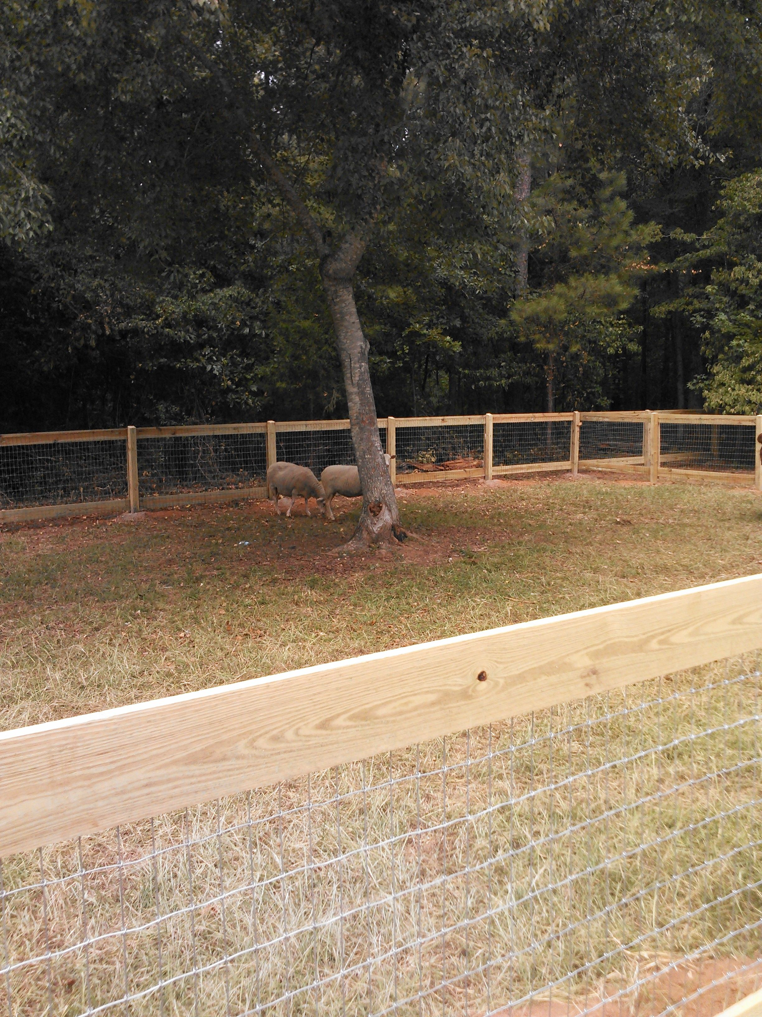 wire farm fence. 2 Rail Farm Fencing With Cap Boards And 2x4 Wire Fence C