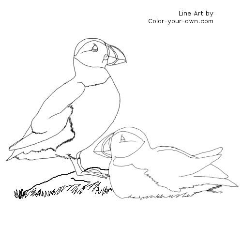 puffins coloring page