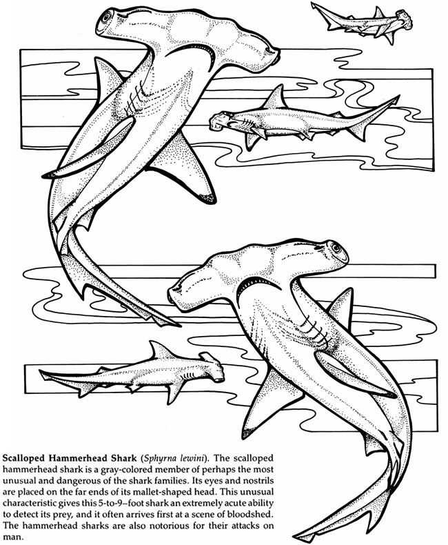 Sharks of the World Coloring Book Dover Publications | Coloring ...