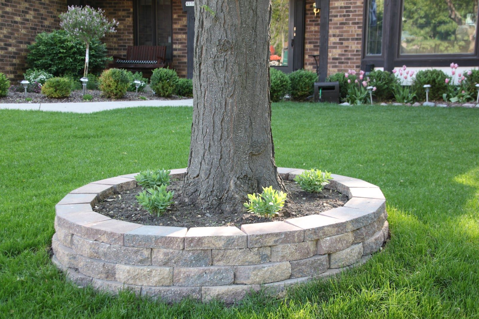 Raised seating wall around tree bing images yard and for Raised garden wall ideas
