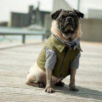 The Fieldworker Dog Vest