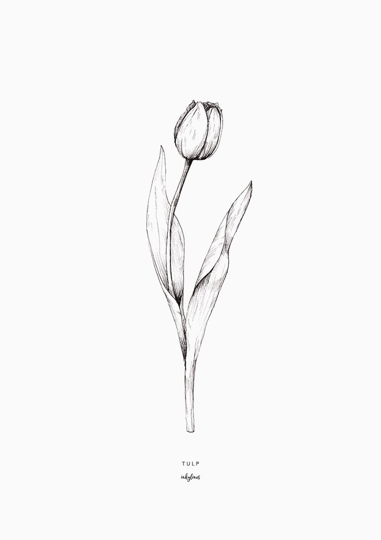 White Tulip Tattoo