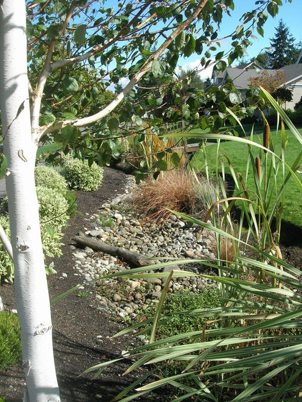 Yes Green Infrastructure: Water Works: Contain Showers With A Rain Garden