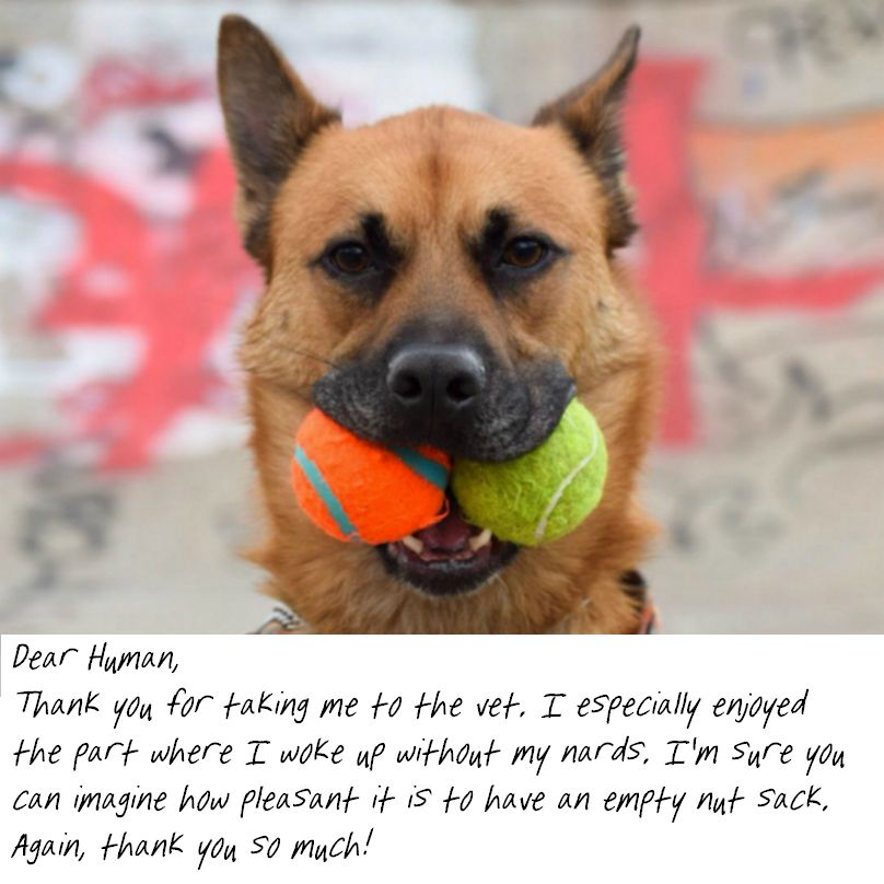 17 Hilarious Passive Aggressive Notes Dogs Would Totally Write