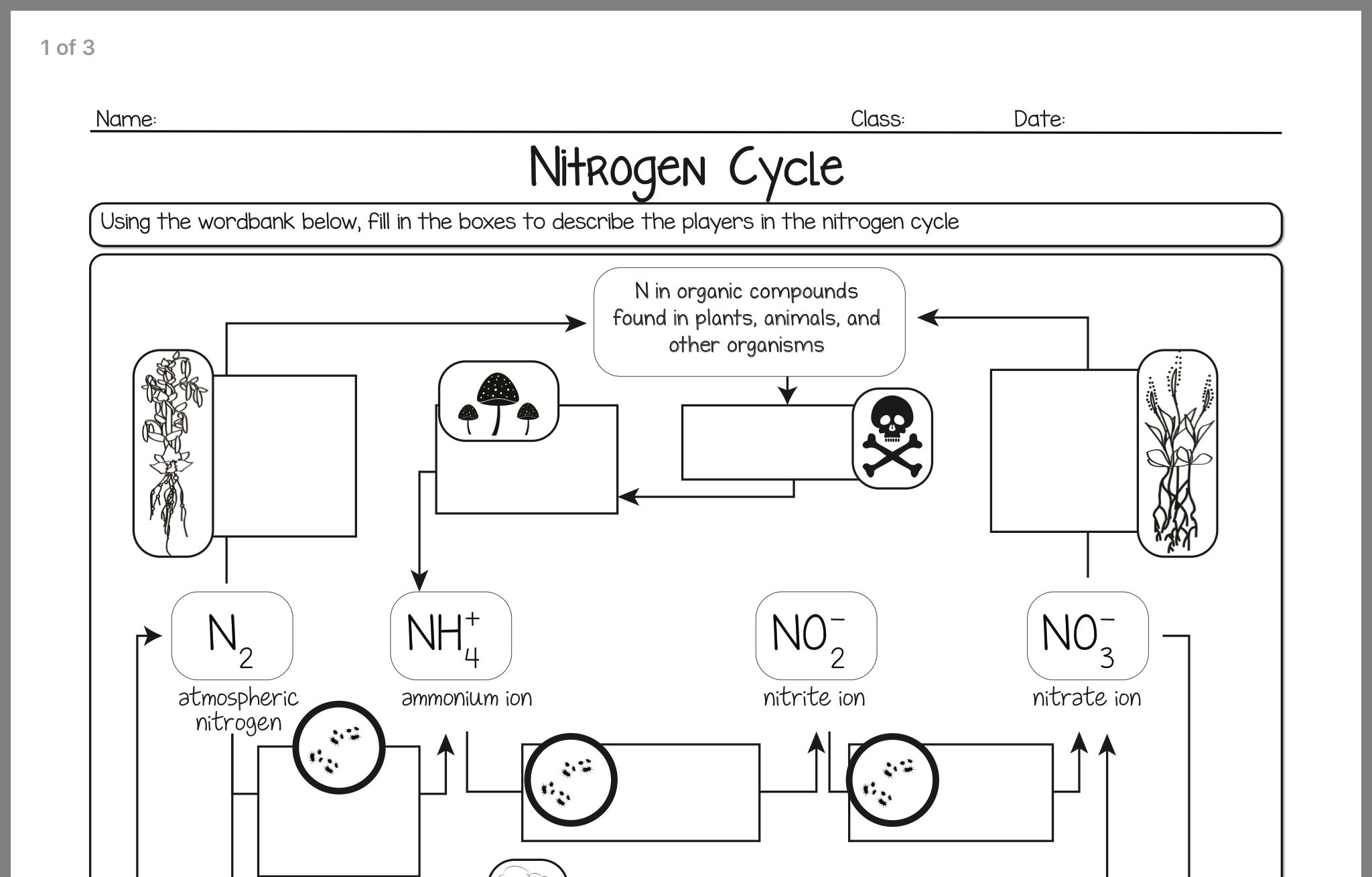 Grade 9 Nitrogen Cycle Worksheet Answers