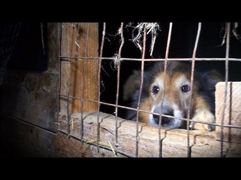Take Action Video And Links And Petition To Sign And Share