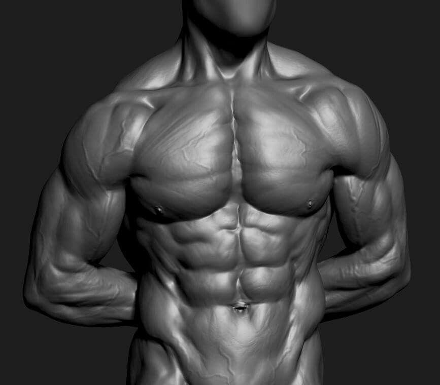 Glauco torso study | Exemples Modélisation 3D | Pinterest