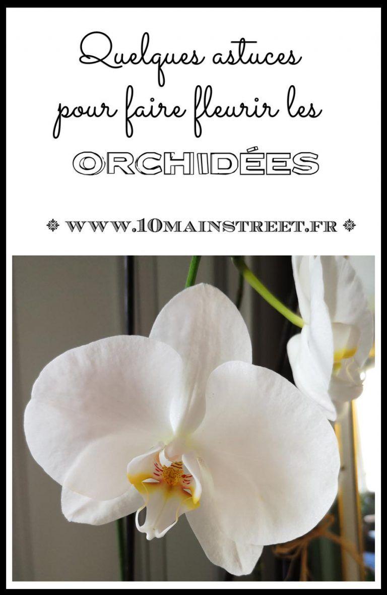 Faire Fleurir Les Orchidees Quelques Astuces En 2020 Avec