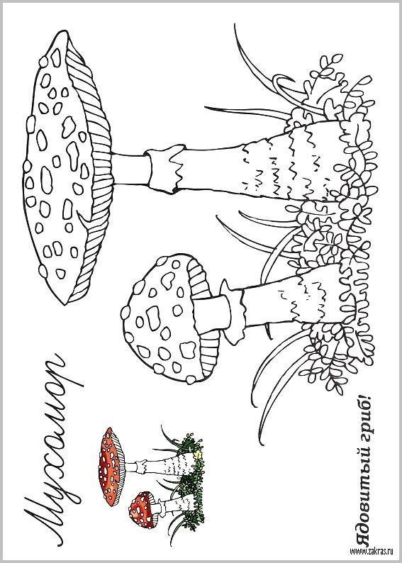 Грибы и ягоды. Раскраска для детского сада | Раскраски ...