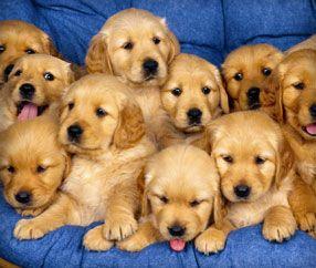 Borrow A Dog In Nyc Puppies Behind Bars Dogvacay Com Social Tees Animal Rescue Imagenes De Perros Perros Perros Y Bebes