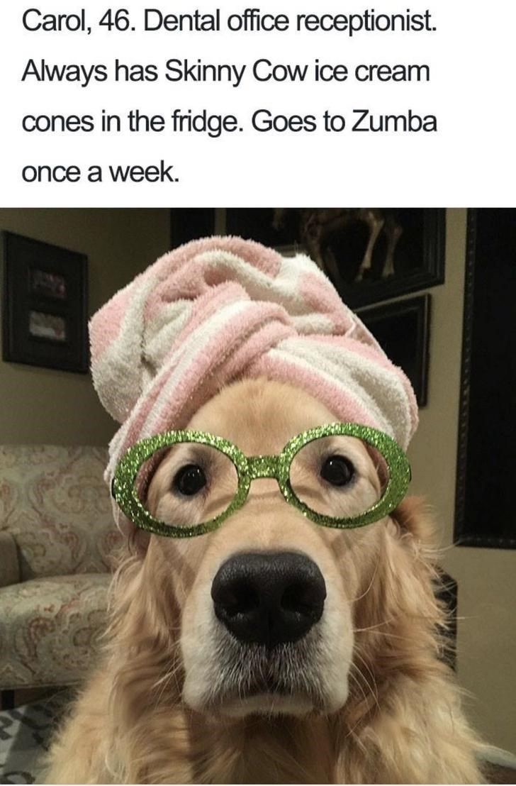 dogs if they were humans funny pinterest