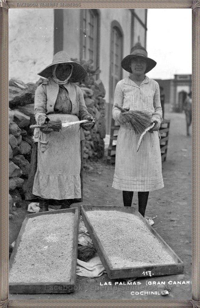 Gran Canaria  -barriendo cochinilla año 1930..... #fotoscanariasantigua #tenerifesenderos #fotosdelpasado #canariasantigua #canaryislands #islascanarias #blancoynegro #recuerdosdelpasado #fotosdelrecuerdo