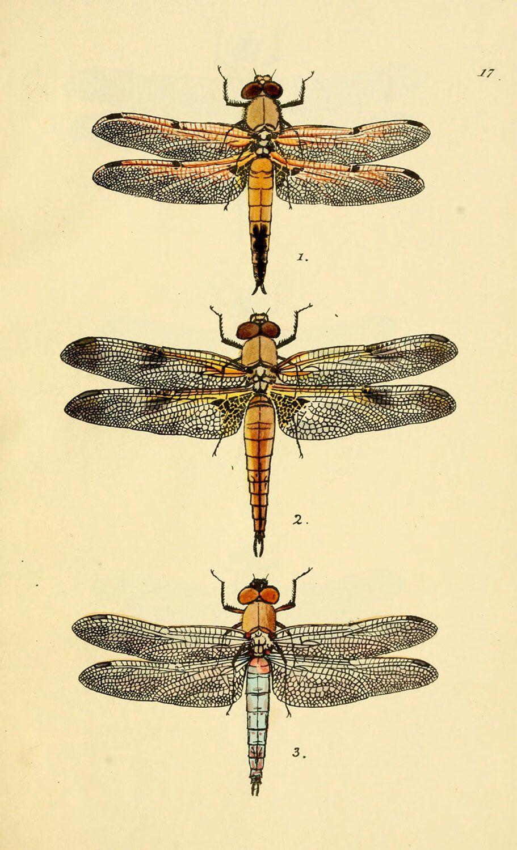 Dragonfly art print, vintage printable digital download, collage ...