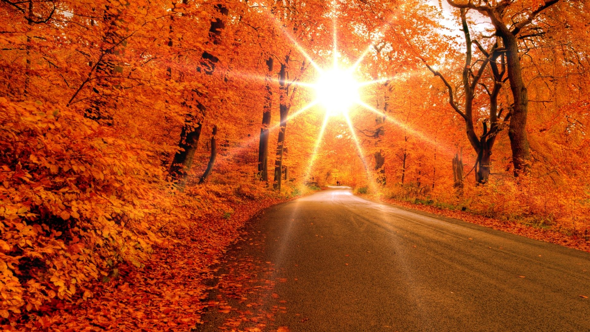 Fall Leaves Wallpaper High Quality Resolution Natures Wallpapers