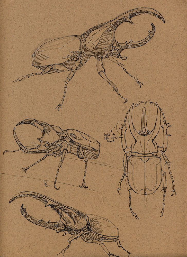 an anatomical overview of ants an insect species An overview: ants, ants and more ants  as the insect waves its abdomen in the air,  one of the most diverse types of ants in the world, with over 150 species, .