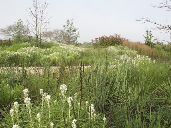 Piet oudolf 14 acre private garden nantucket island for Piet oudolf private garden