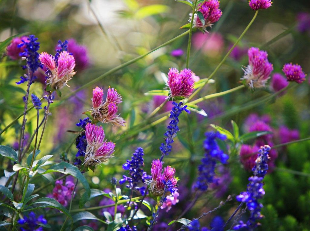 Pin de luzmary quiceno cardona en jardines hermosos Pinterest