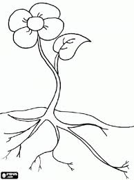 Flower Anatomy Coloring Pages