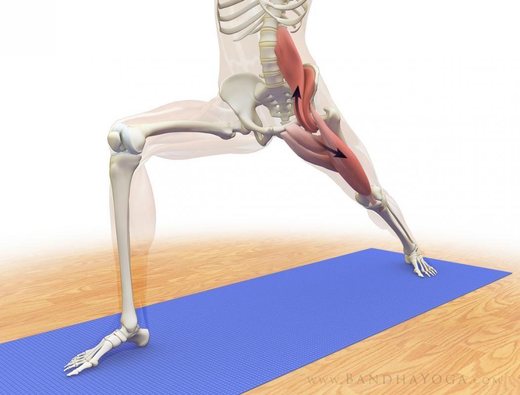 bc3213ecd85cd E un muscolo sconosciuto eppure determina tutta la nostra postura mobilità  e anche la salute mentale e la vitalità. Si chiama Psoas è …