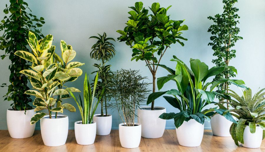 Prozdrowotne Rosliny Doniczkowe Ktore Warto Miec W Domu Indoor Green Plants Best Indoor Plants Plants