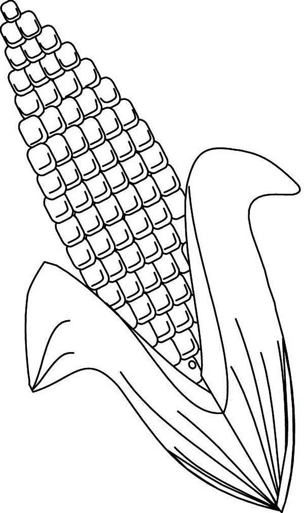Pin On Heirloom Popcorn Seed Company