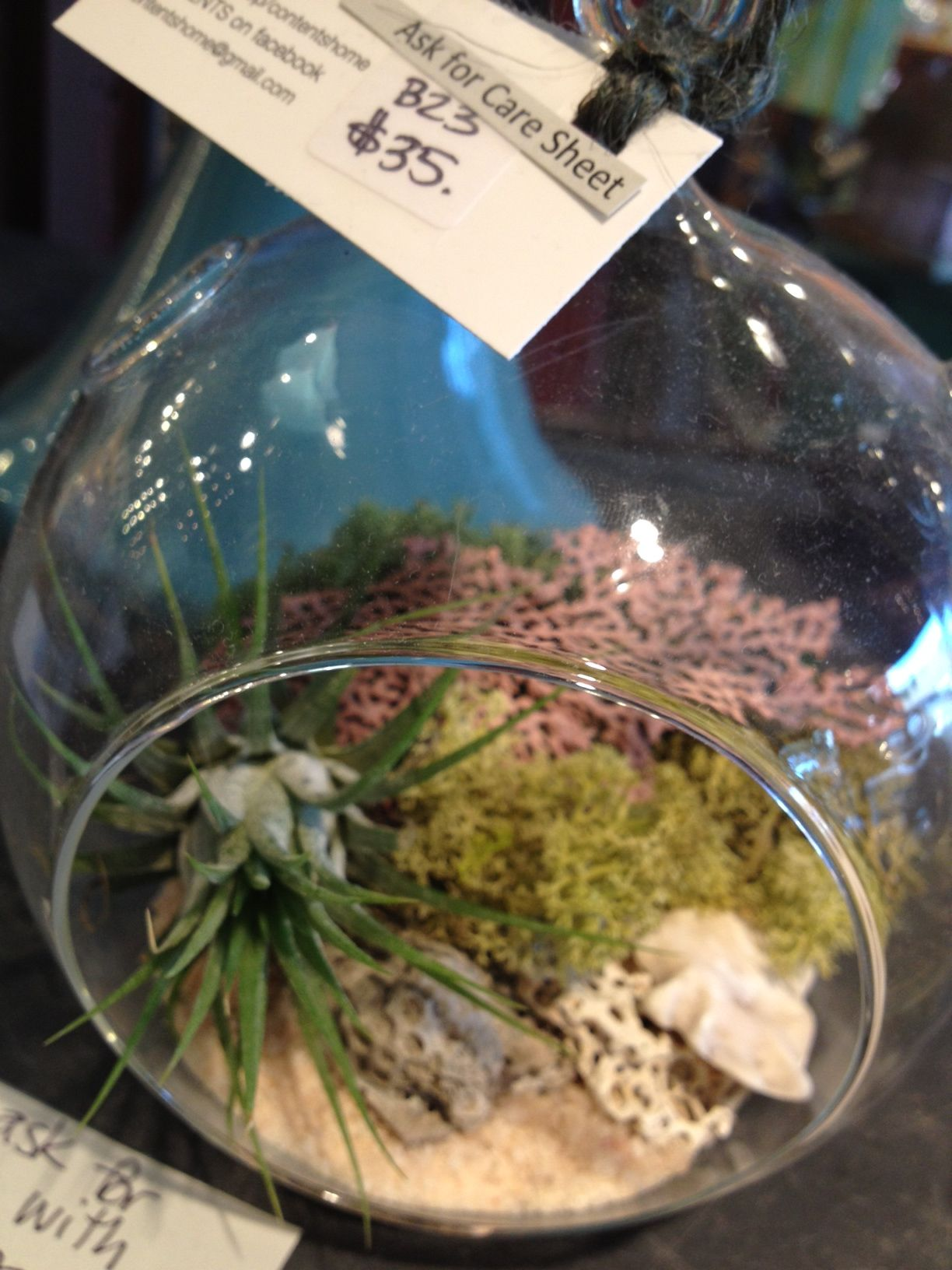 sweet, we love the airplants in the orbs   $35