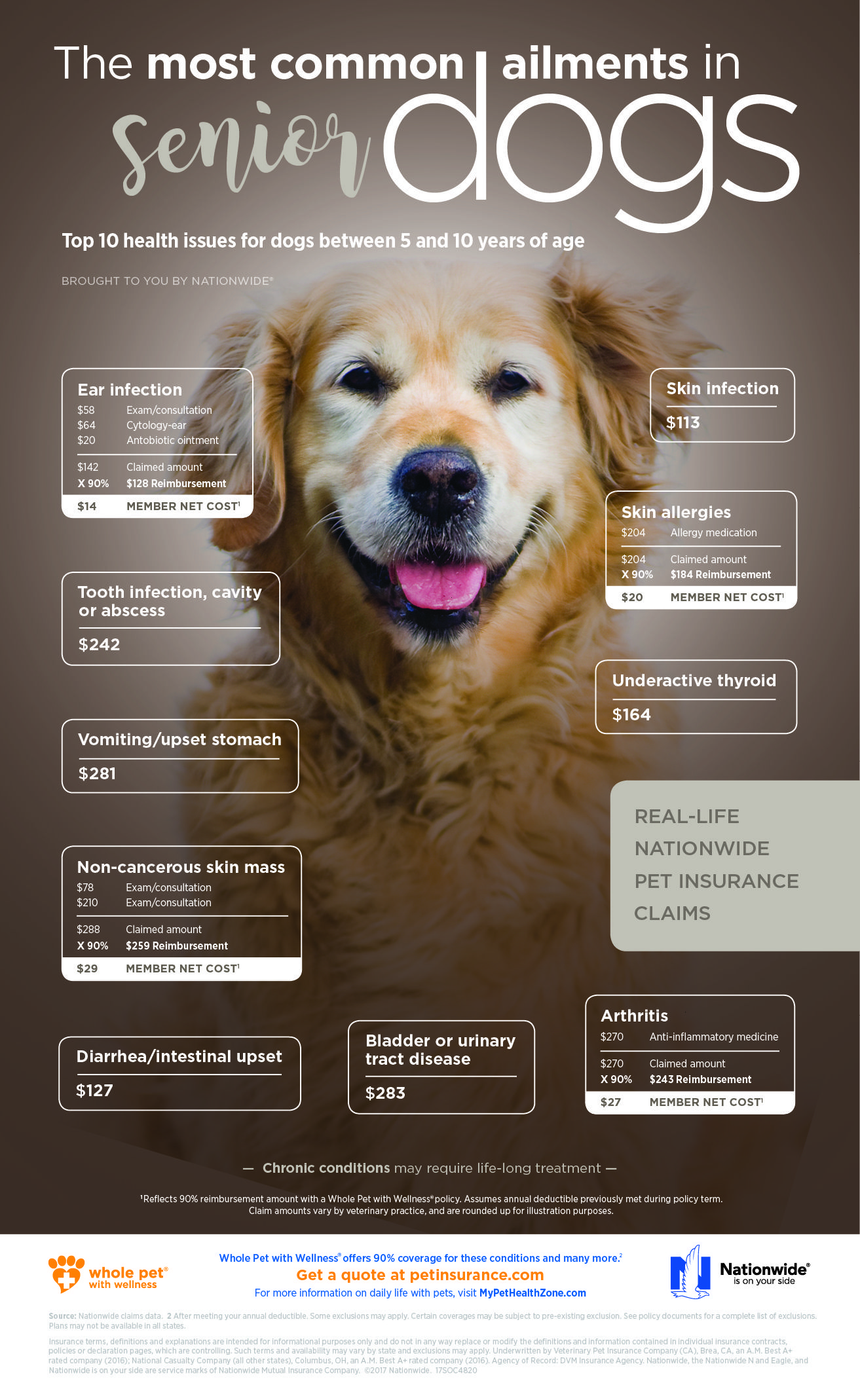 Common Ailments In Senior Dogs Dogs Dog Senior Old Ailments
