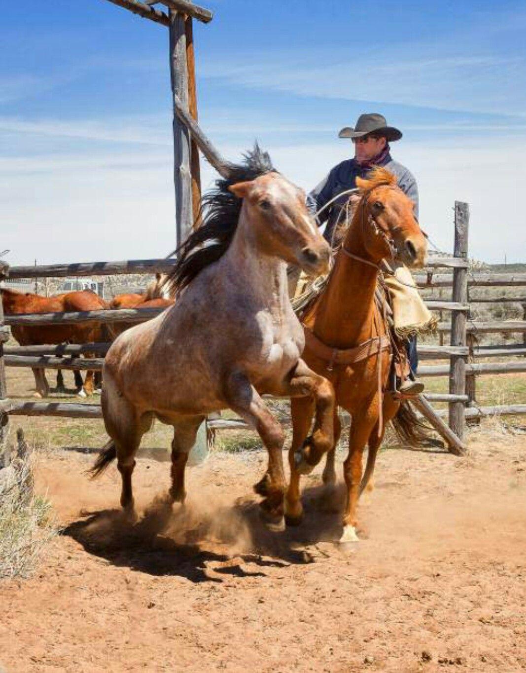 Pin de jheycob 🇵🇦 Lopez en Doma cowboy  50fe64d69e8