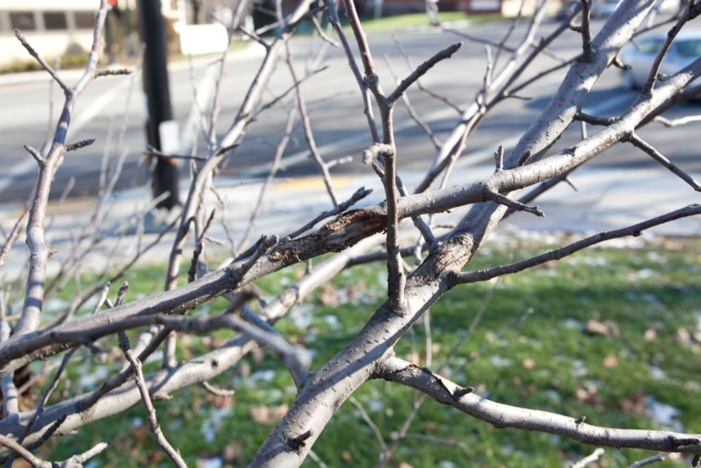 2 Good Reasons to Prune your Trees & Shrubs in the Winter