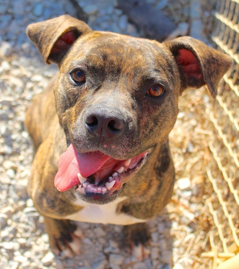 Adopt Marley On Adoption Dog Adoption Marley