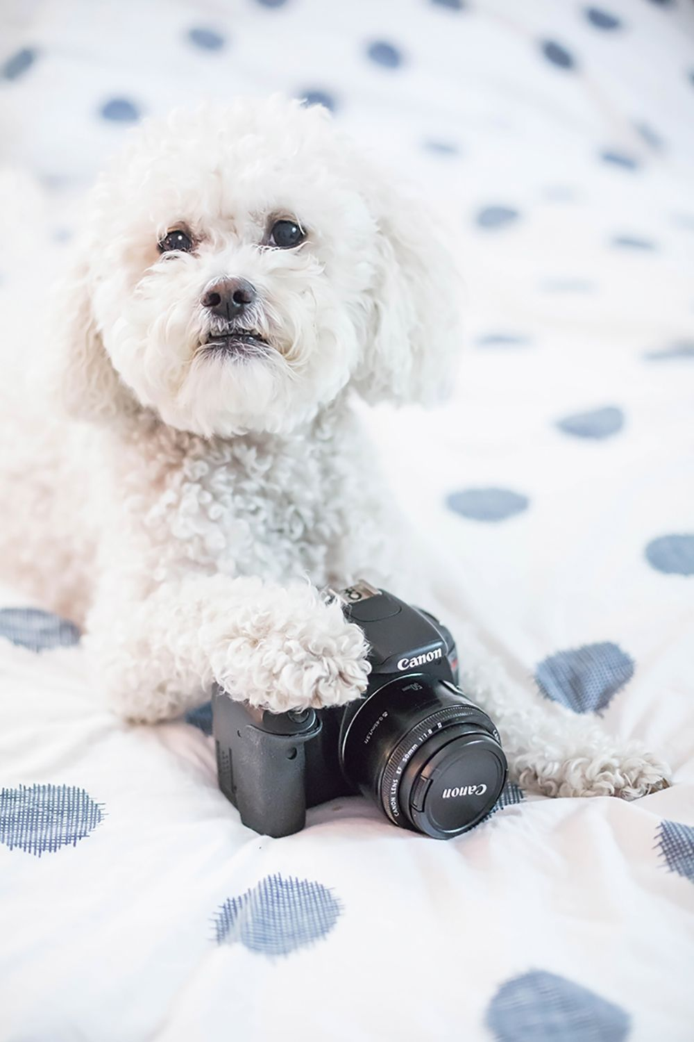 ONLINE DOG MAGAZINE HOW TO GET PUBLISHED AS A DOG