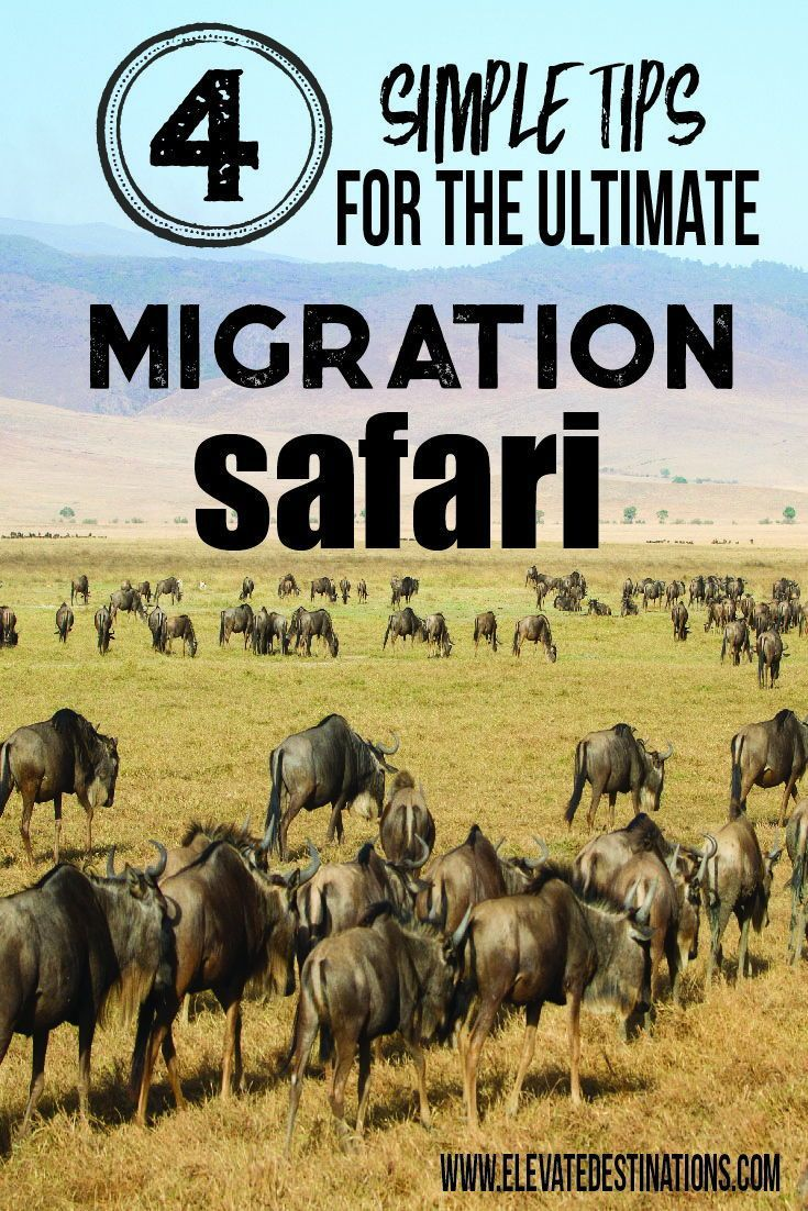 How To Plan The Ultimate Great Migration Safari