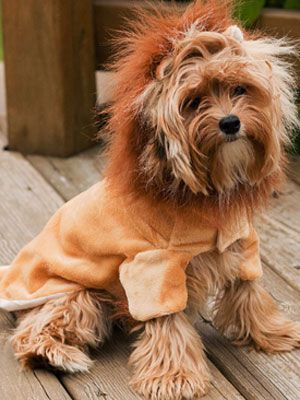57 Dog Costumes That Get Your Pup In On The Halloween Fun Pet Costumes Dog Halloween Costumes Funny Pet Halloween Costumes