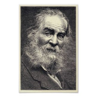 Walt Whitman Engraving, Age 52 Poster