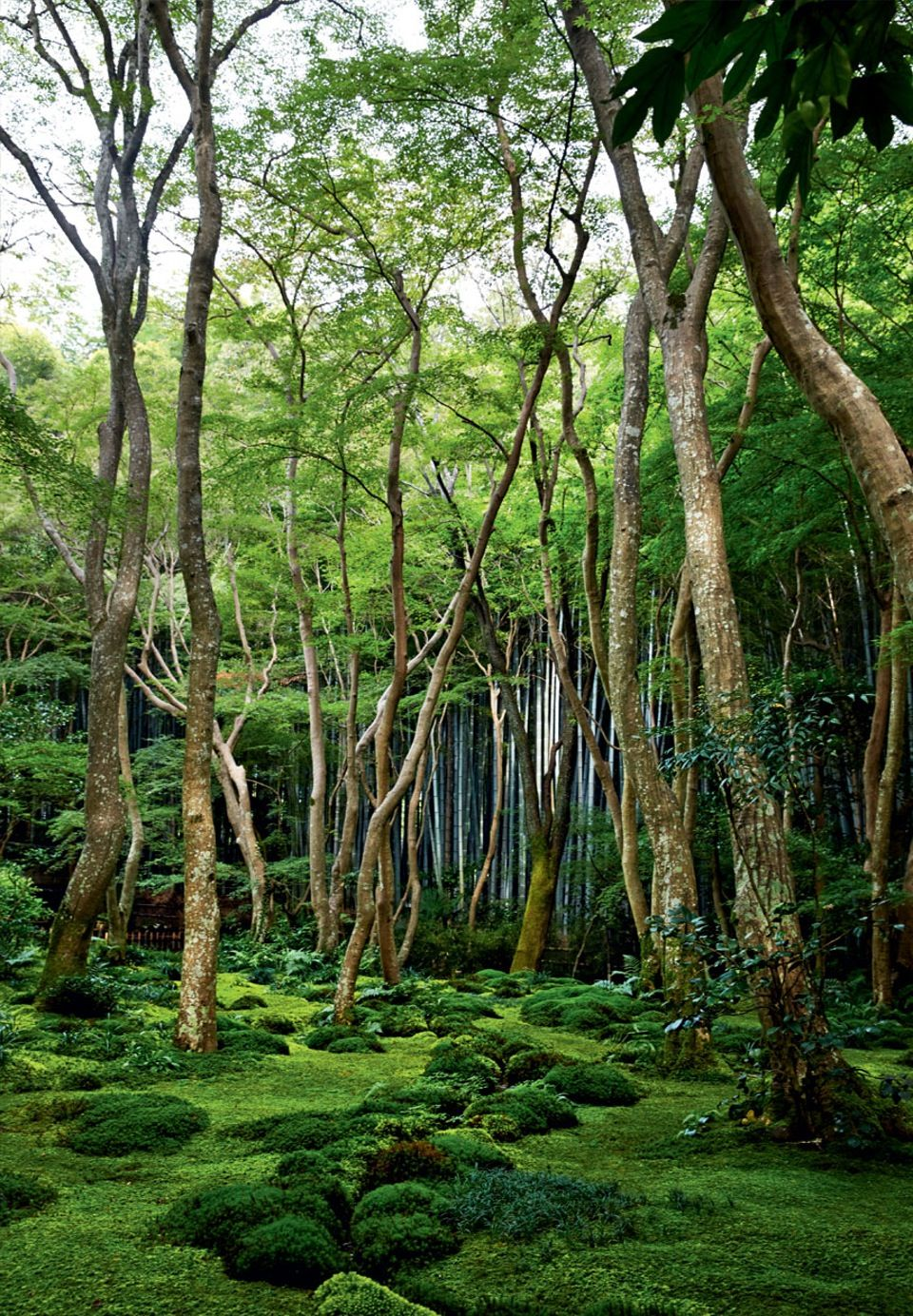 Adventurous moss garden in Kyoto. Learn how to grow moss in your ...