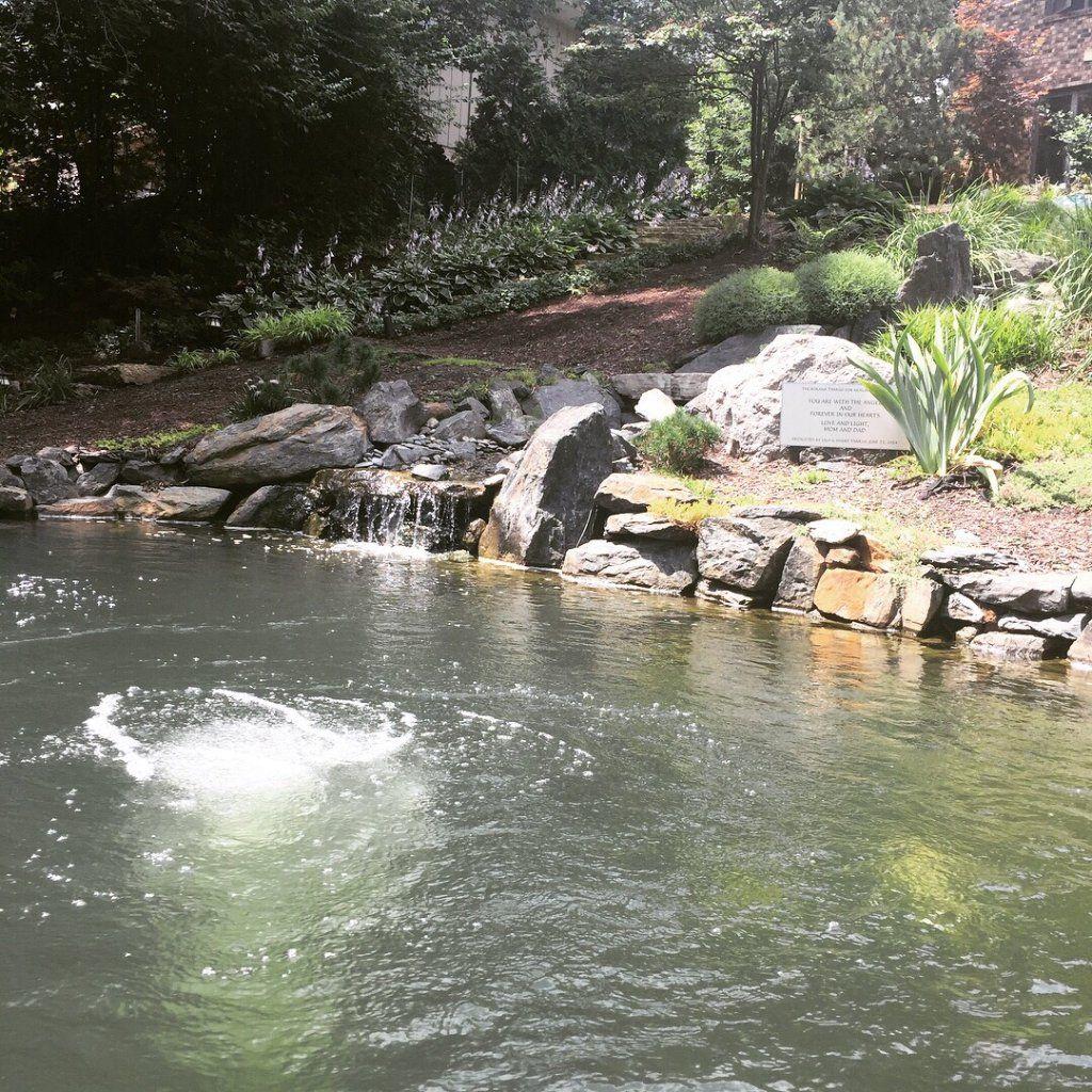 d2ffe62955b616f9154d479e5386addc - The Koi Whisperer Sanctuary & Japanese Gardens