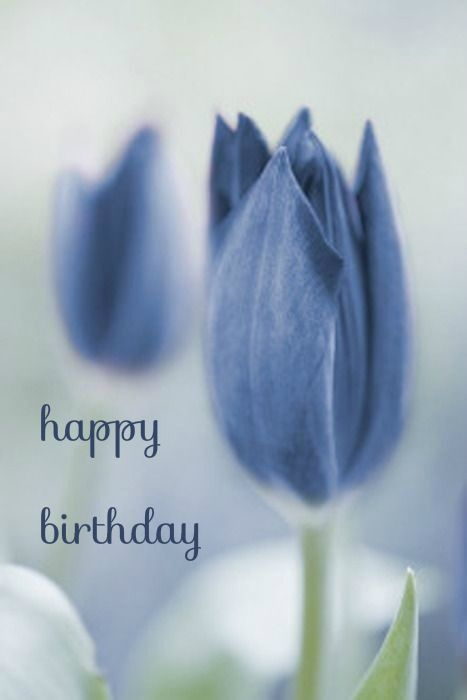 Find This Pin And More On Birthday Wishes Hy To You Blue Tulip