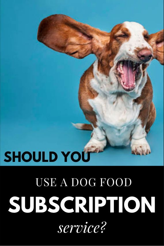Dog food meal delivery or dog food subscription services