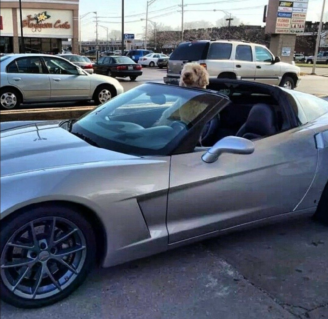 Pin By Mike Plesha On Golden Doodle Awesomeness Bmw Goldendoodle Bmw Car
