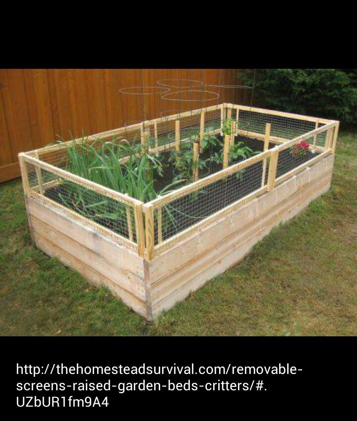 Raised Garden Bed With Critter Fence