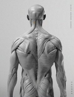 human anatomy model for artists - Google Search | Anatomy in 2018 ...