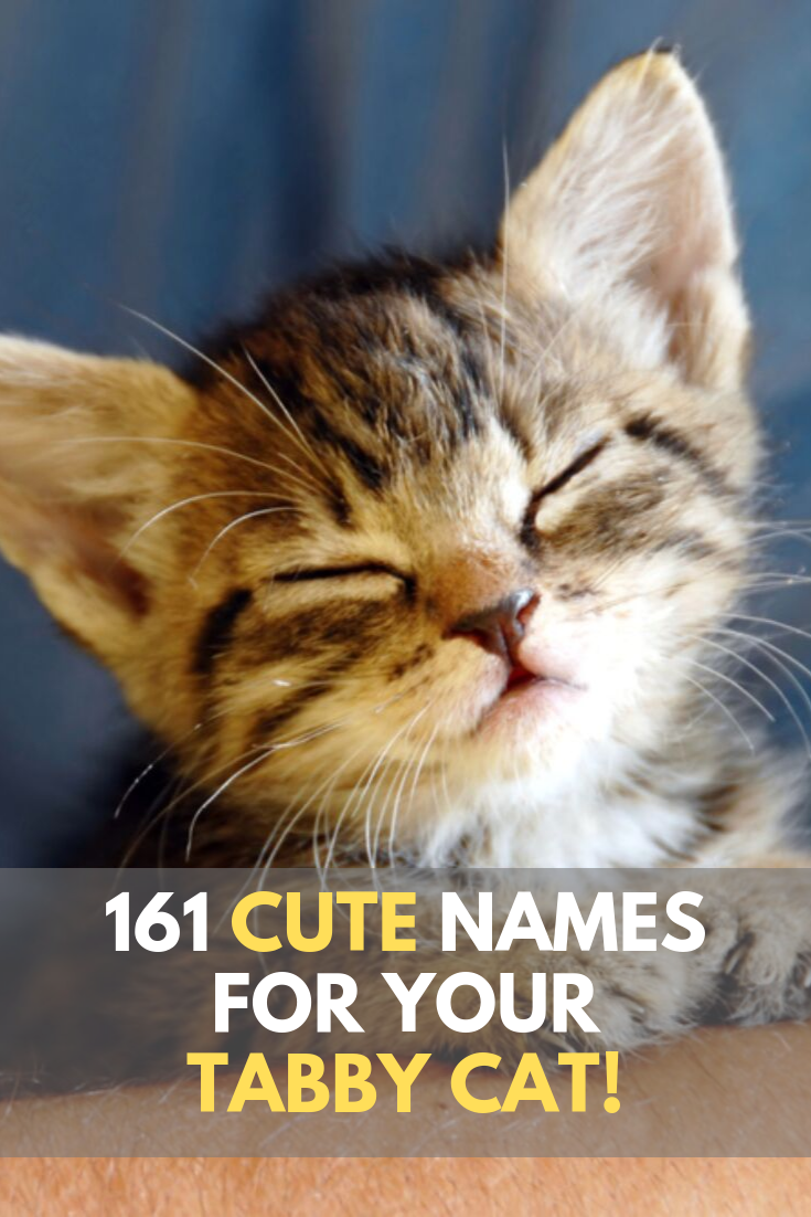 Looking for inspiration in naming your female tabby cat