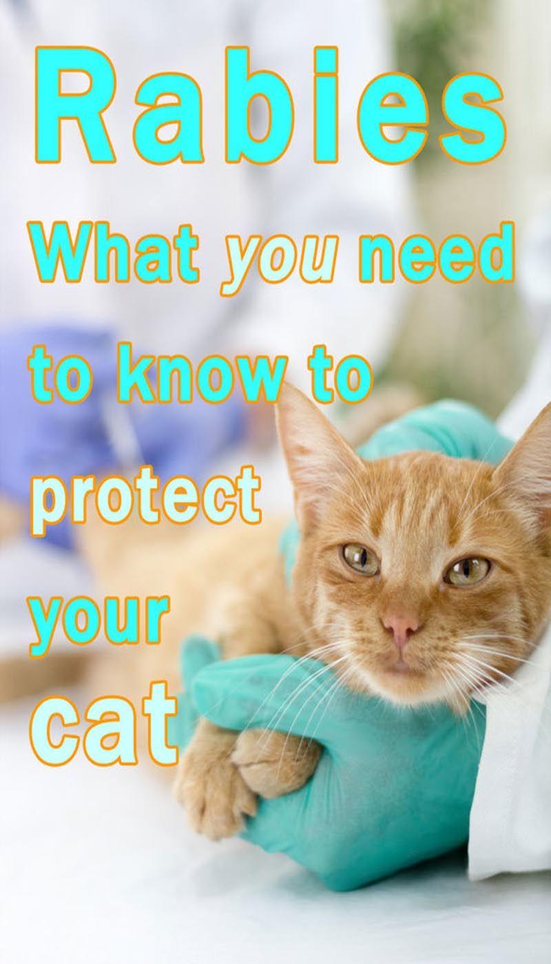 Pin On Cat Diseases