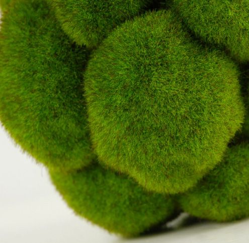 Decorative Moss Balls Interesting Bumpy Moss Balls 5In  Long Shelf Decoration And Furniture Market Decorating Design