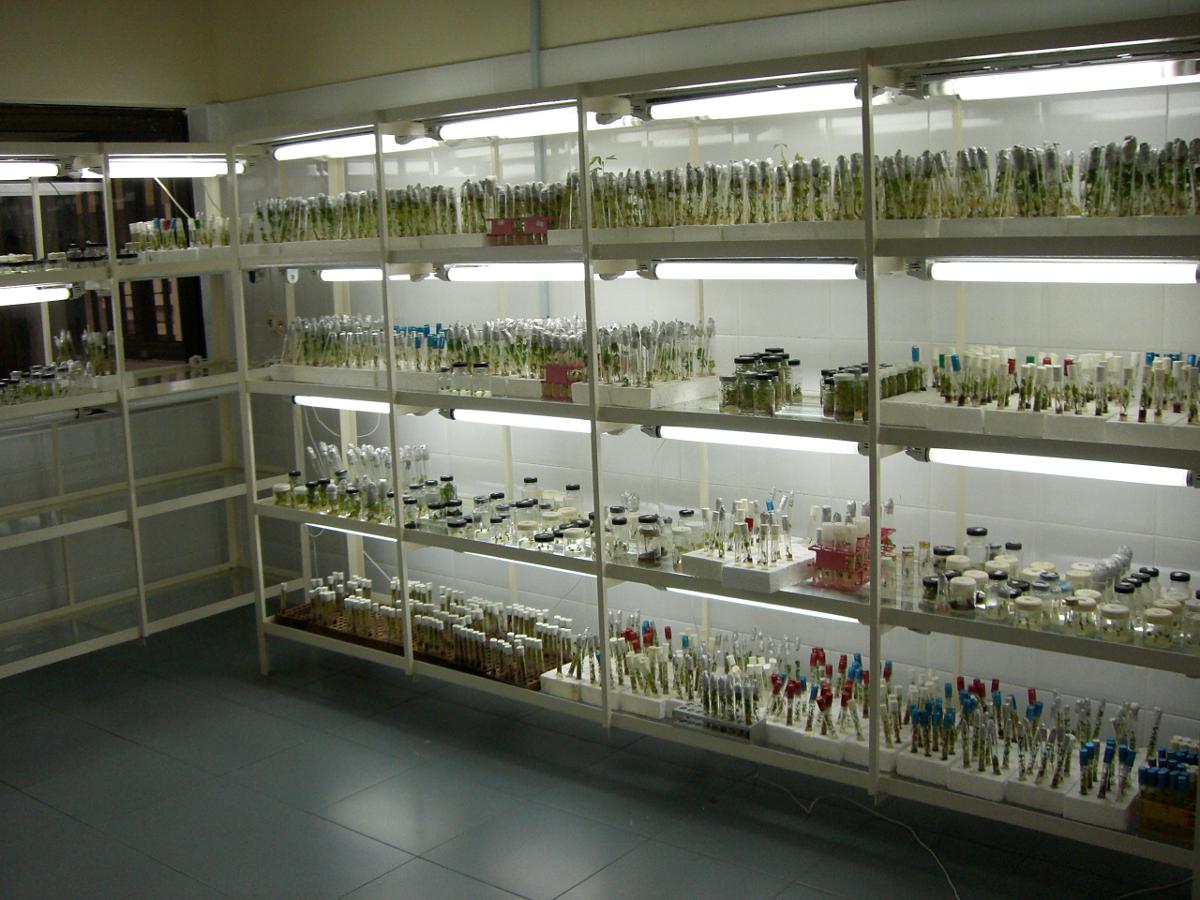 Plant tissue culture laboratory   Archy   Plants, Science