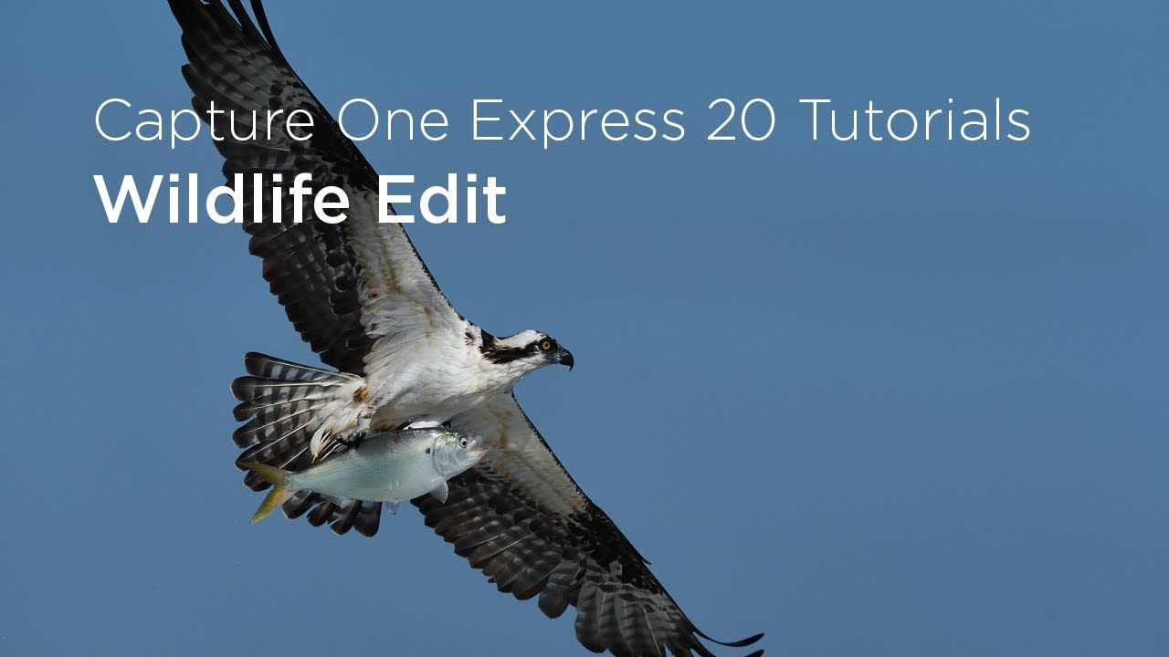 Capture One Express 20 Tutorials Wildlife Edit Expressions Tutorial Wildlife
