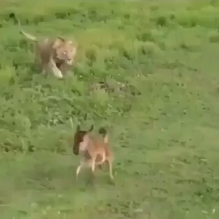 I know what is going on here, but this lil guys survival instincts are strong!