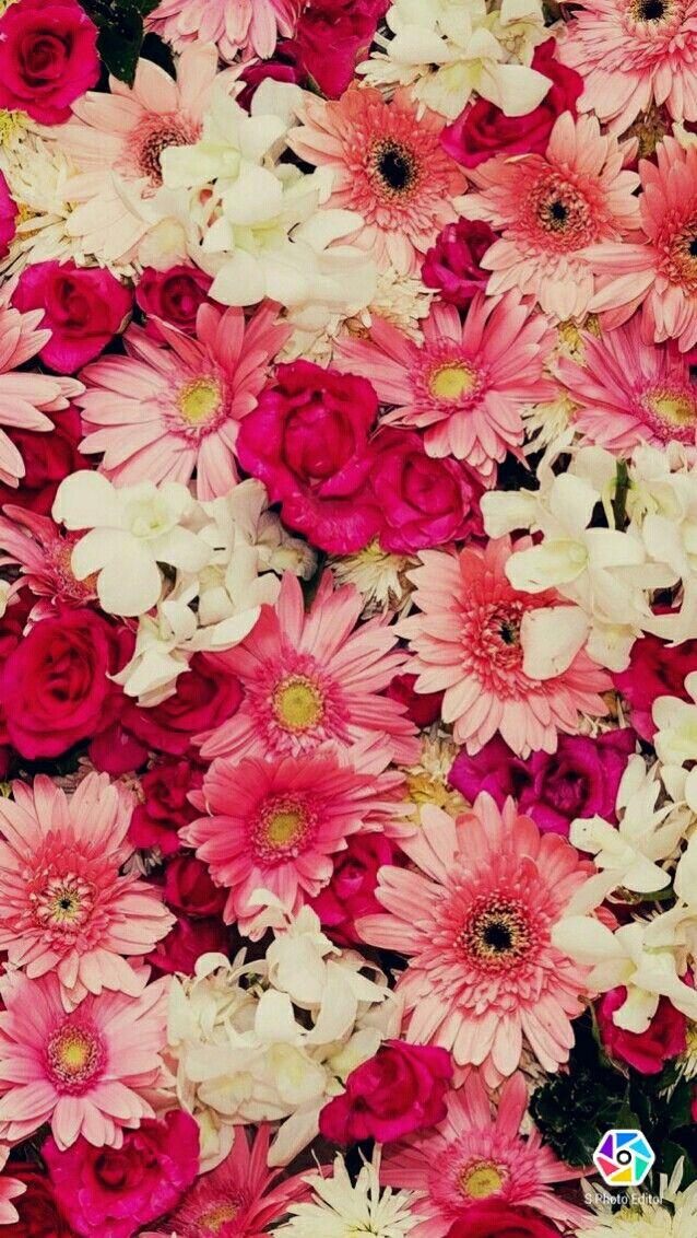 Flores Rosas Fondos En 2019 Fondos Primaverales Fondos Y Fondos