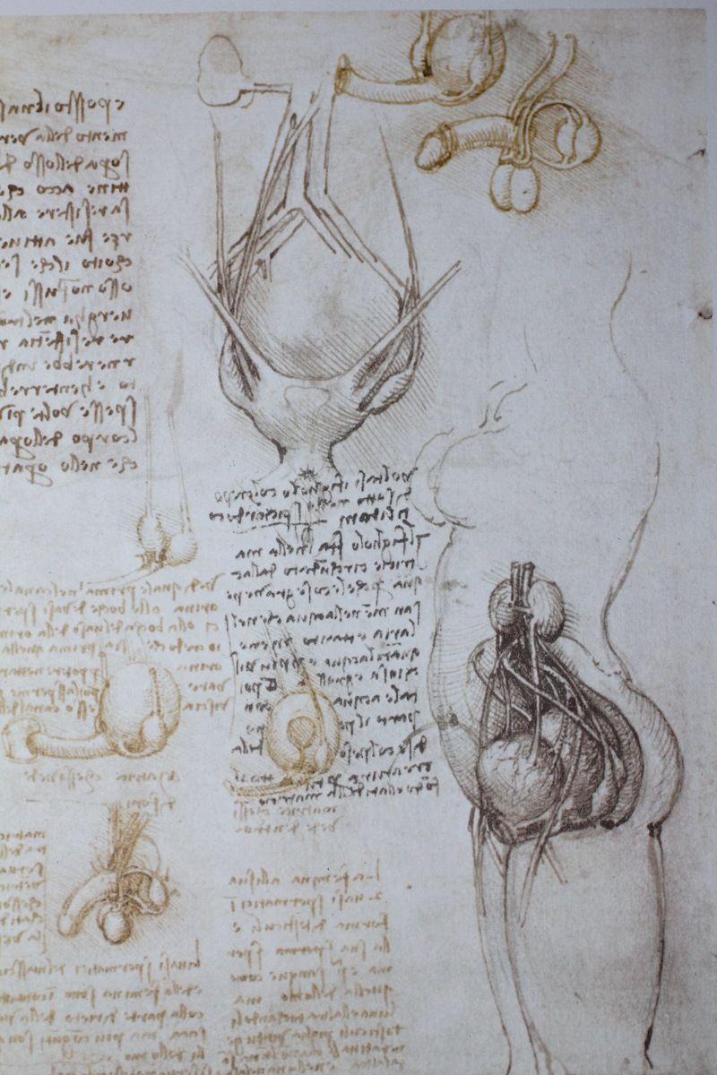 https://theartstack.com/artist/leonardo-da-vinci/anatomical ...