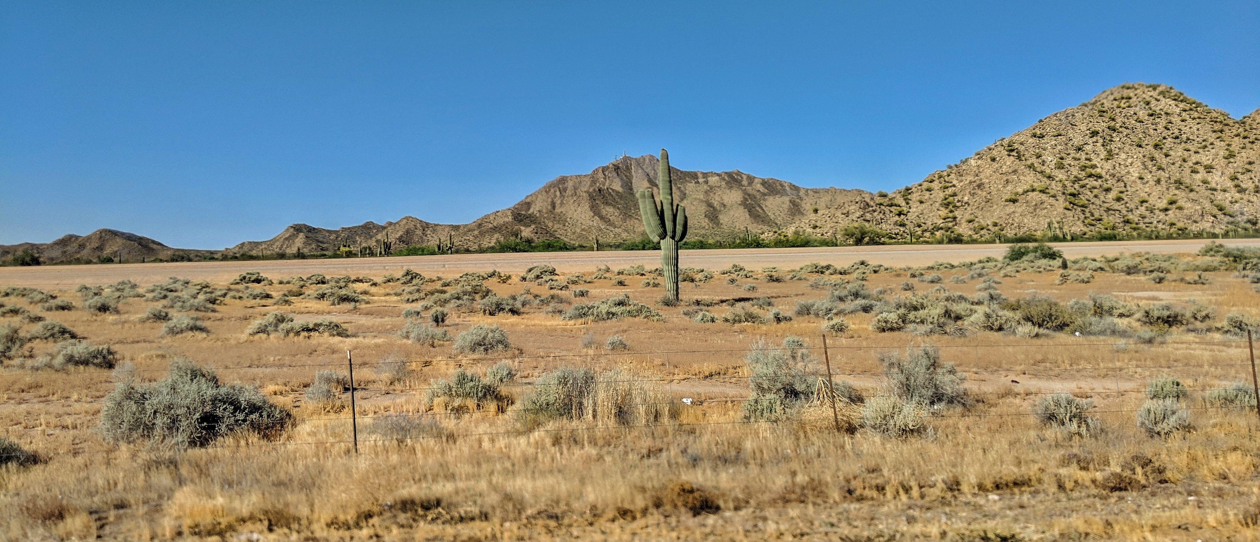 Coolidge Arizona Cactus #arizonacactus Coolidge Arizona Cactus #arizonacactus Coolidge Arizona Cactus #arizonacactus Coolidge Arizona Cactus #arizonacactus Coolidge Arizona Cactus #arizonacactus Coolidge Arizona Cactus #arizonacactus Coolidge Arizona Cactus #arizonacactus Coolidge Arizona Cactus #arizonacactus